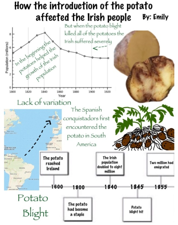 potato blight