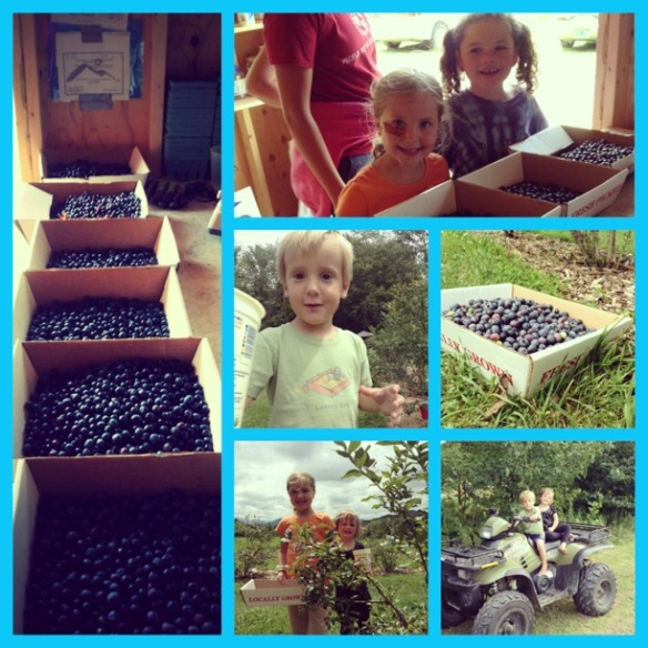 Berry picking fun