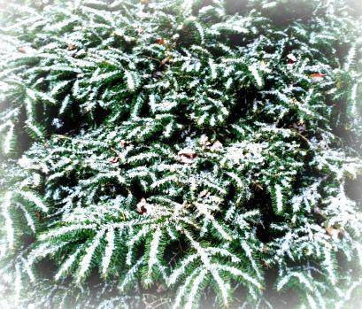 snowongreen
