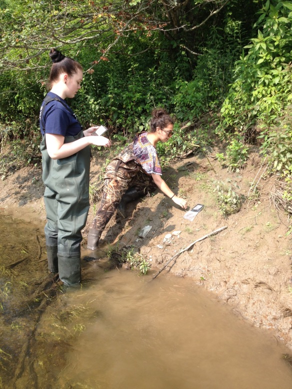 BFA students Sophie Lee and Rebekah Larose deploy Global Decomposition bags in the Bank Zone at Black Creek in E. Fairfield during July 2015.