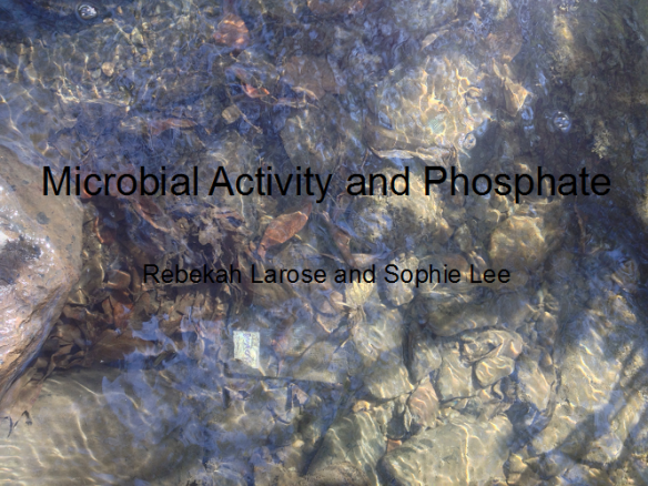 (Title slide of Rebekah Larose and Sophie Lee's Oral presentation.  Pictured is a global decomposition bag (silver) placed in the toe zone of Allen Brook in Williston, VT.)