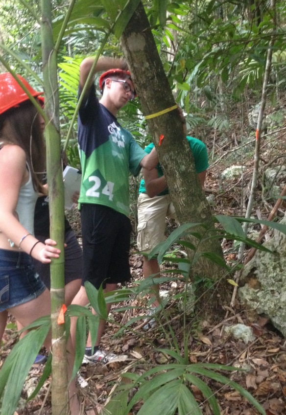 BFA senior Bastien T collects data in the tropical deciduous forest in Florida, PR