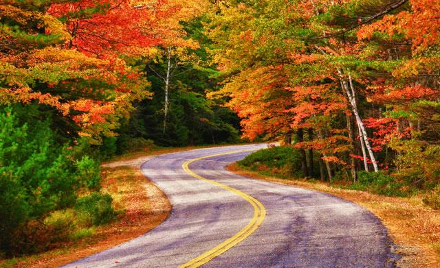 fall_foliage_autumn_leaves_roadtrip