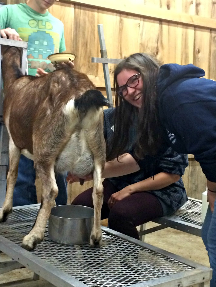 Abi T learning how to milk a goat