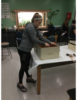 A student cleans propolis from a hivebox.